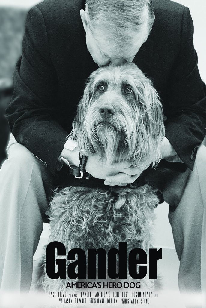 Gander 687x1024 Gander: Americas Hero Dog (2017) short film review